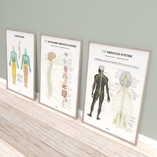 neurology posters