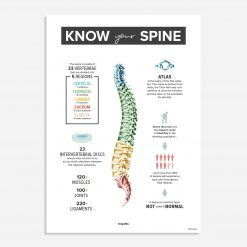 know your spine