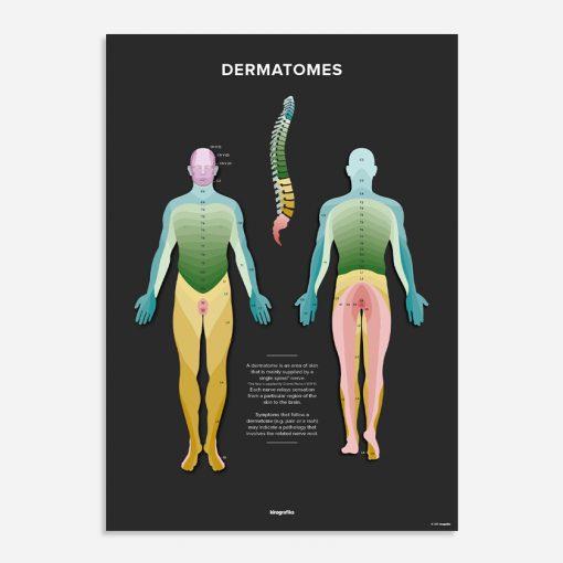 dermatomal chart