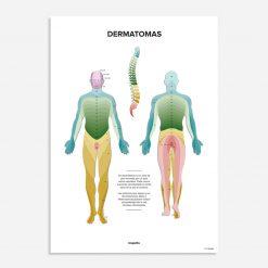 los dermatomas poster