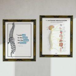 hippocrates chiropractic