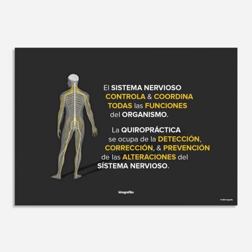 sistema nervioso y la quiropráctica