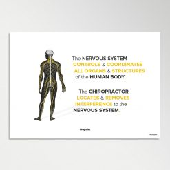 chiropractic nervous system