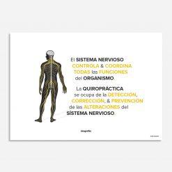 quiropráctica y sistema nervioso