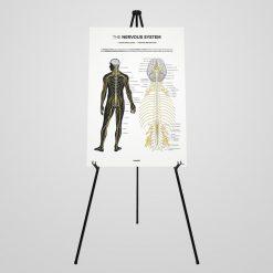 nervous system display