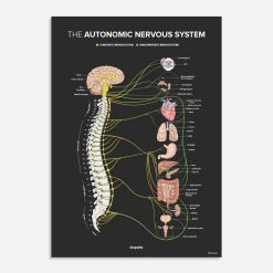 Autonomic nervous system chiropractic poster