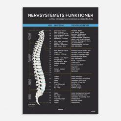nervsystemets funktioner