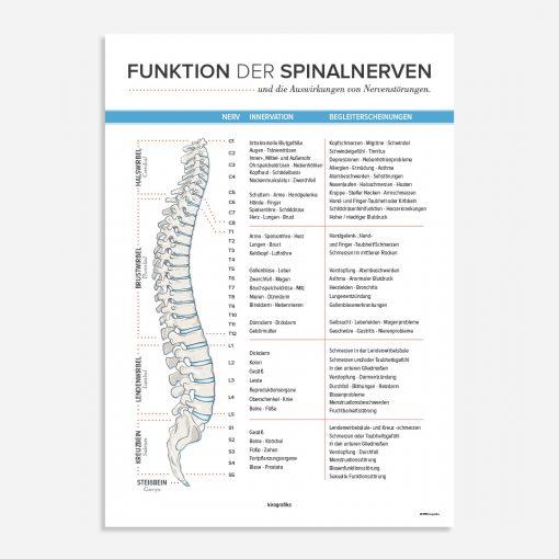 Funktion der Spinalnerven