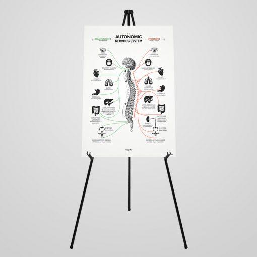 autonomic nervous system portable