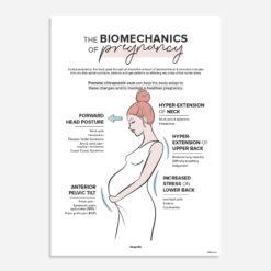 biomechanics of pregnancy