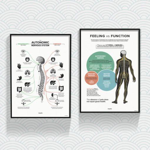 feeling vs function chiropractic
