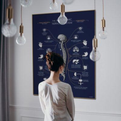 branded autonomic nervous system poster