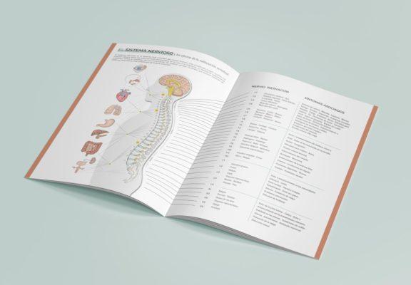 chiropractic report of findings 3