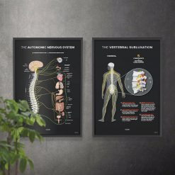 subluxation and nervous system