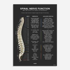 spinal nerve chart dark