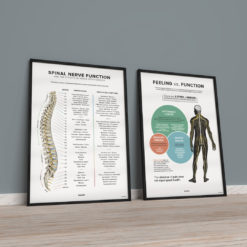 modern chiropractic posters