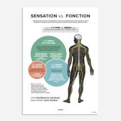 sensation vs fonction
