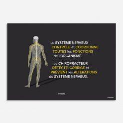 systeme nerveux chiropracteur